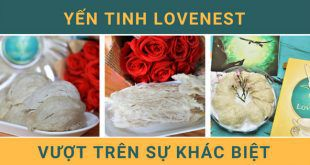 To-yen-tinh-che-lovenest